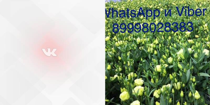ст 9 59 Садовод Вконтакте мужская одежда фото профиля